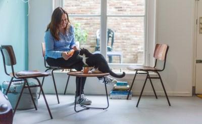 Kattenparadijs Mispoes: tachtig gasten per dag