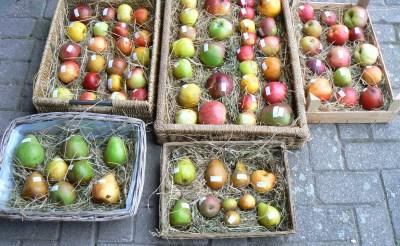 Dag van het Fruit: proeven van Brabantse bodem