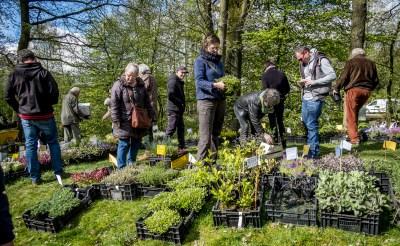 Bijen- en plantenmarkt in Boxtel
