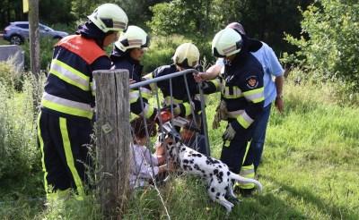 Brandweer bevrijdt hond