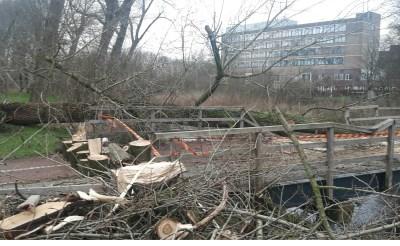Omgewaaide boom op Meulenbrug