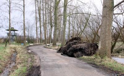 De stormschade: een samenvatting in beeld