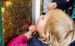Ook Boxtelse bijenmarkt gaat dit jaar niet door