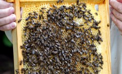 Bijenhouders openen deuren