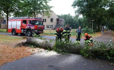 Omgewaaide bomen in Boxtel