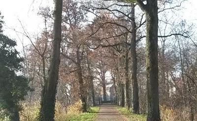 Boxtel rooit bomen nabij park Stapelen
