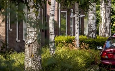 Toch afzonderlijk bomenbeleidsplan Boxtel