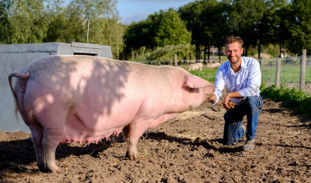Robert van Buuren met Félicienne, de oudste zeug van de boerderij.