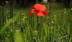 Bloemenwandelingen