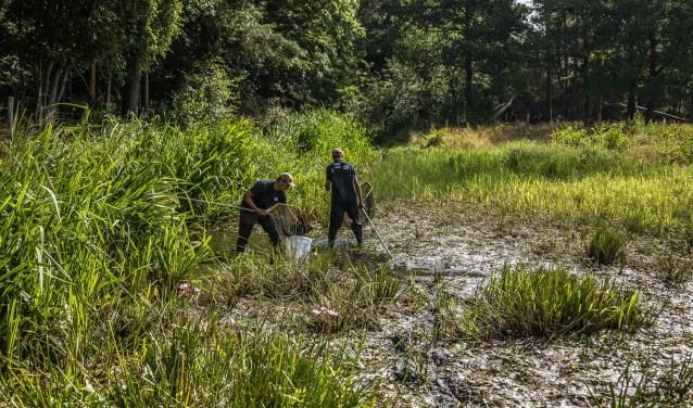 Waterschap-Aa-en-Maas-overzetten-vissen-Snelle-Loop-naar-Aa-200718
