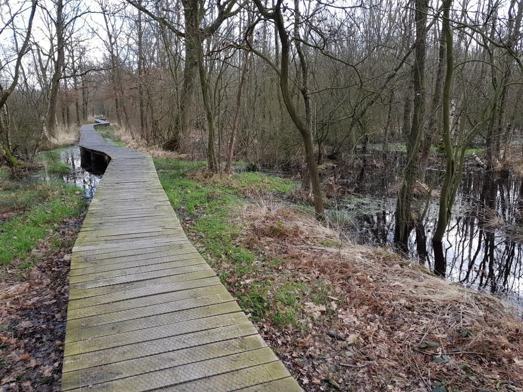 Buulderbroek en Cranendonckse bos   © grenskoerier