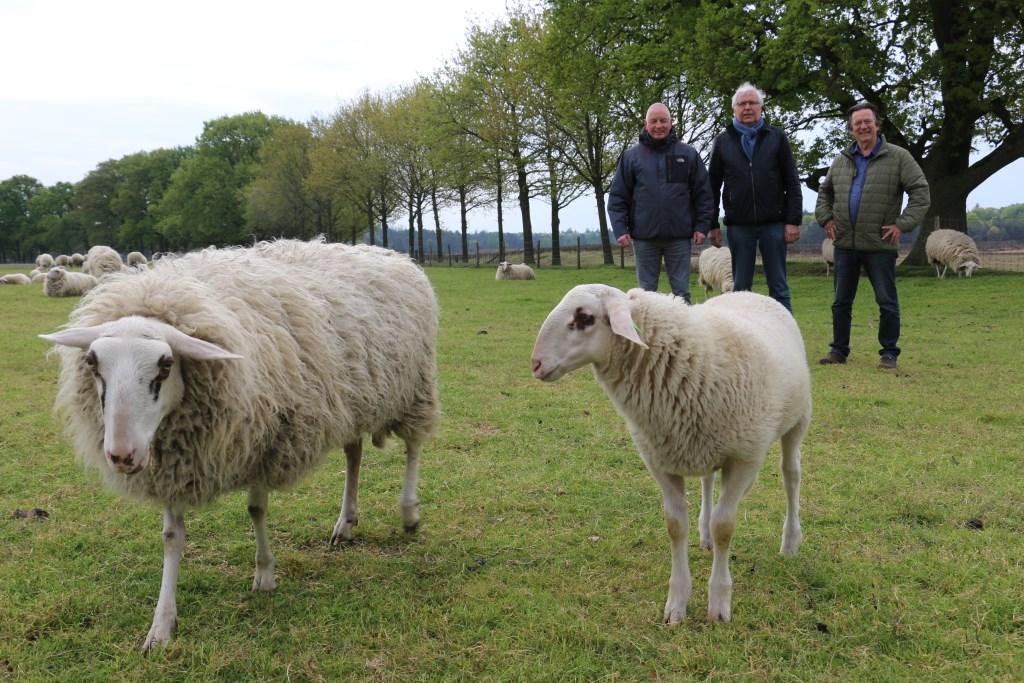 Vlnr: William, Herman Prangsma en Alan Geensen op locatie bij de Edese schapen.