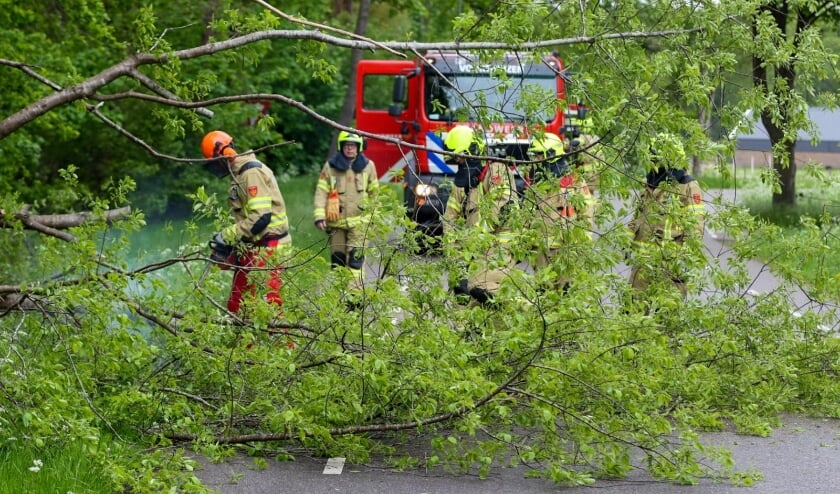 Grote boom waait over Garderbroekerweg in Voorthuizen