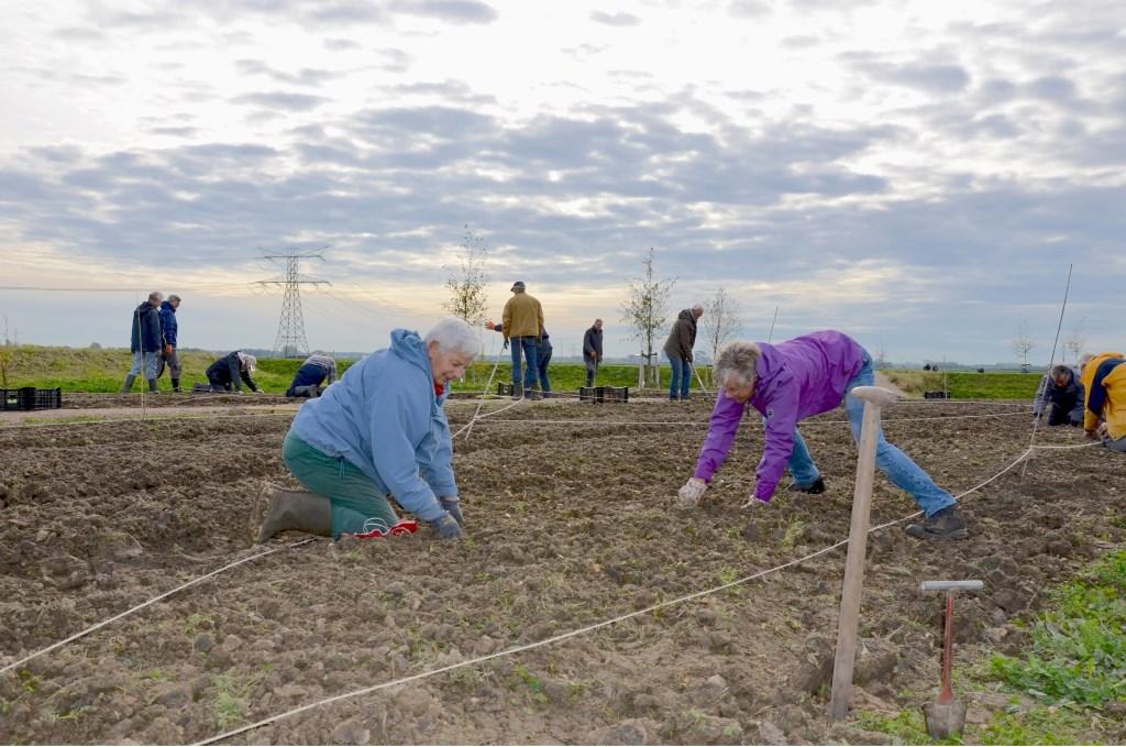 Vrijwilligers gingen in november 2018 op de knieën in de Hennipgaarde om 35.000 bloembollen 'in te stoppen'.  © HvH Waddinxveen