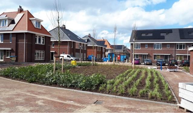Veel groen in een wijk vermindert wateroverlast en zorgt voor meer biodiversiteit.