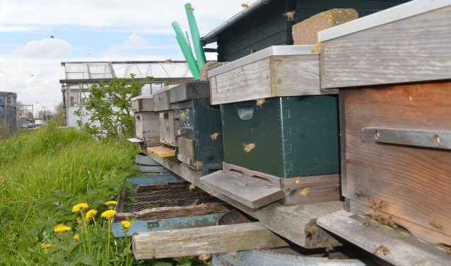 De bijenbungalows op volkstuinencomplex De Peuleschil. (foto's en tekst: Silvia Markus)
