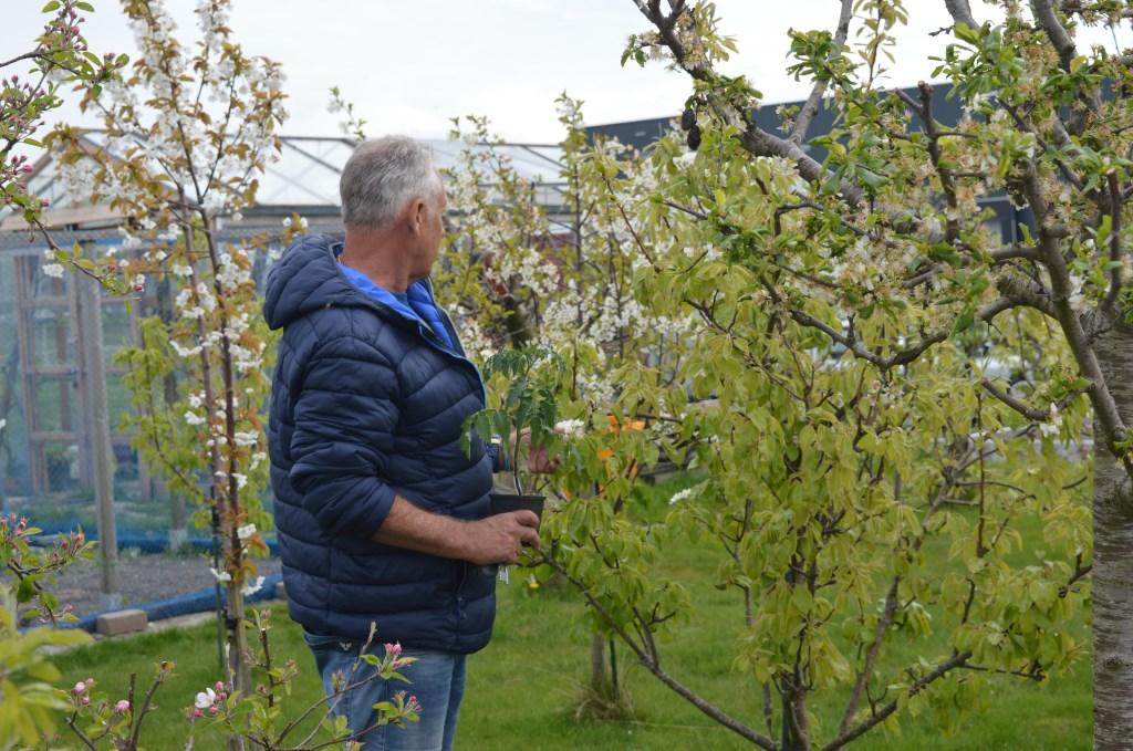 Imker Erik Tempelaars inspecteert zijn bloeiende fruitbomen, onmisbaar voor zijn bijen.  © HvH Zuidplas