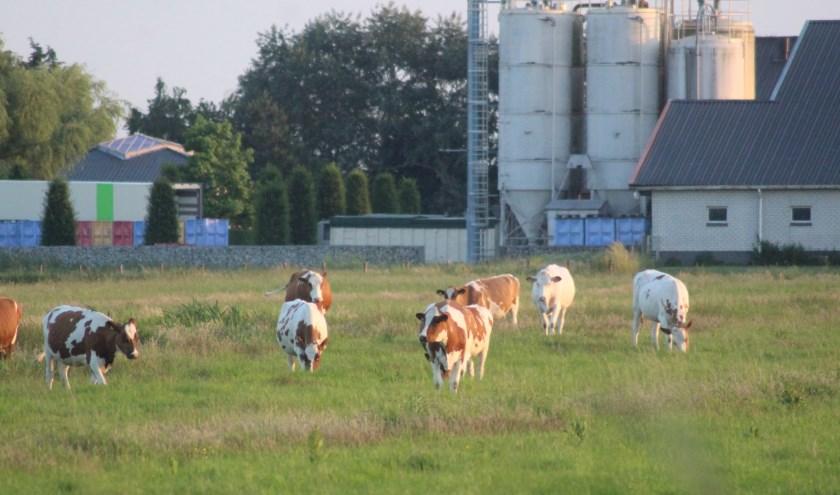 Waar nu de koeien nog grazen, verrijst straks een dorp met duizenden woningen. (tekst en foto: Erik van Leeuwen)