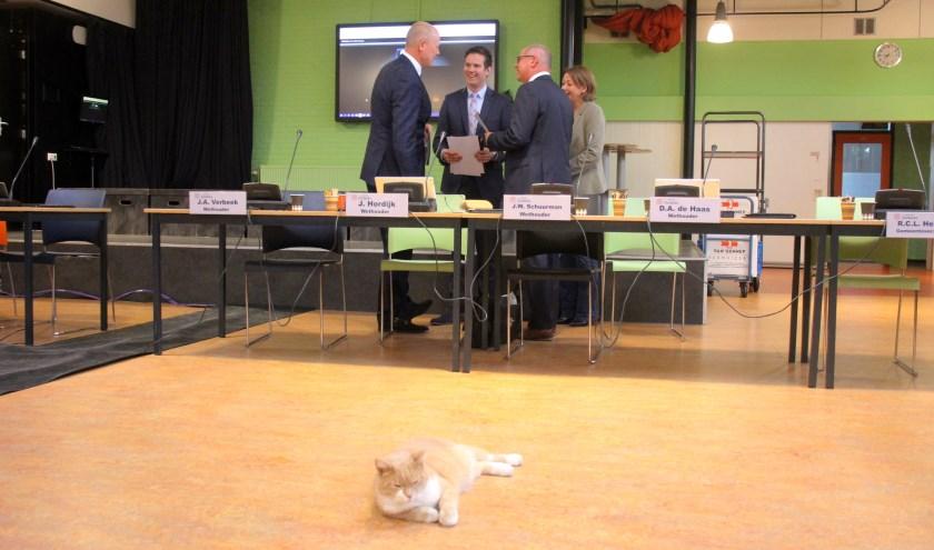 """De roodharige kater posteert zich regelmatig in het middelpunt van de gemeenteraadsvergadering. """"Pure intimidatie"""", aldus de burgemeester."""
