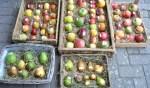 Dag van het Fruit in d'n Liempdsen Herd