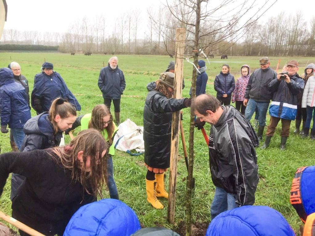 Wethouder Peter van de Wiel helpt een leerling van De Oversteek een boom te planten. Foto: Gemeente Boxtel © MooiBoxtel