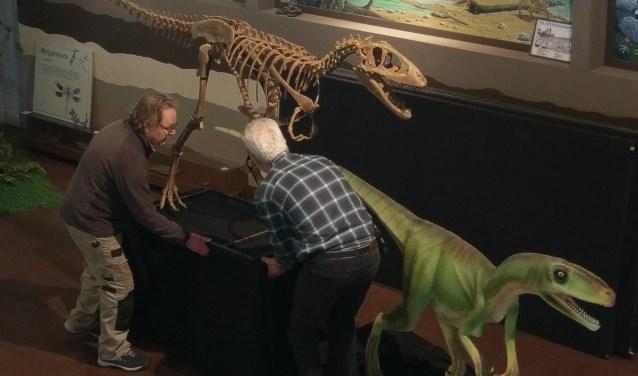 Afgelopen week werd de 'Nederlandse mini-T-rex' op zijn plek gezet. (Foto: Oertijdmuseum De Groene Poort)  | Fotonummer: 4e8e0e