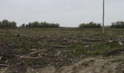 De huidige situatie bij wat er over is van het Bosje van Klompe. (Foto: Kees Slager).