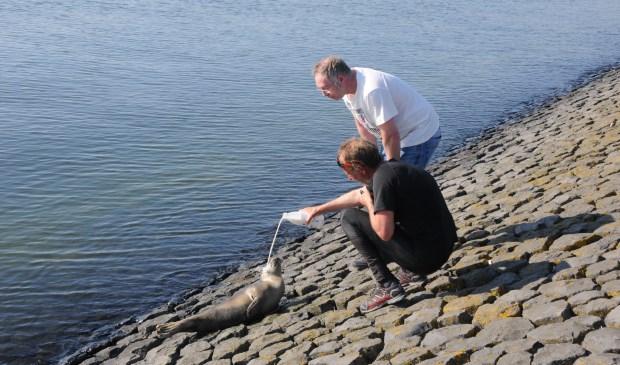 Voorbijgangers proberen het zeehondje melk te voeren.