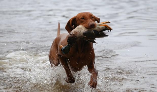 De hond van Carlo en Dolinda in volle actie.  | Fotonummer: 1562a3