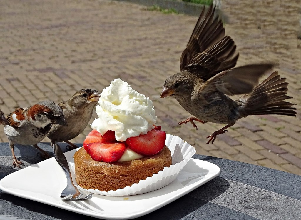 Marijke van den Eertwegh zat even rustig een gebakje te eten op het terras,,,  © MooiRooi