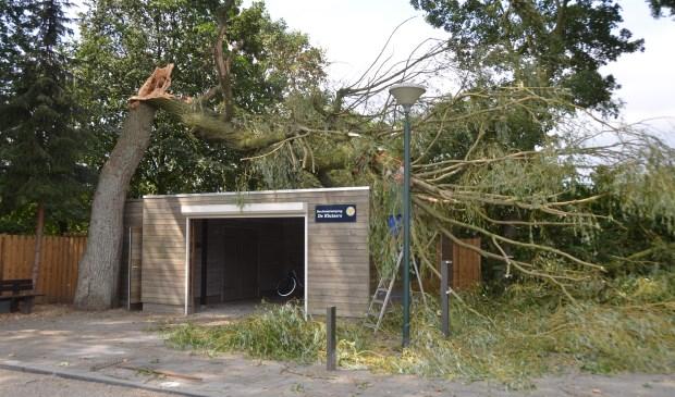 Deze boom knakte vannacht om.  | Fotonummer: 8127ce