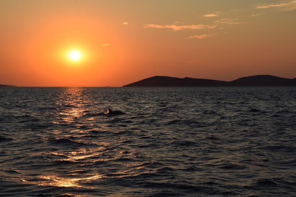 Zonsondergang met dolfijn, Kroatië. Foto; Henri van Hoorn Foto: Henri van Hoorn © MooiRooi