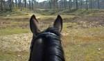 Roois topsportpaard neemt afscheid