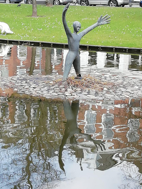 Een meerkoet, broedend bij een standbeeld. Gijs van Aarle Foto: Gijs van Aarle © MooiRooi
