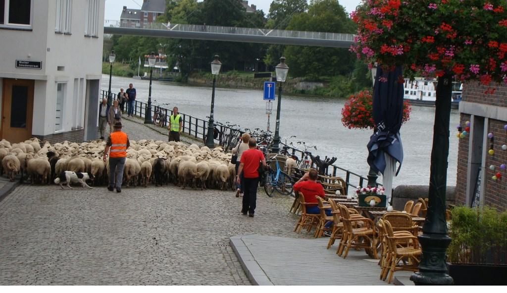 Martin van de Burgt maakte deze foto in Maastricht, Schapen die de brug over kwamen.  © MooiRooi