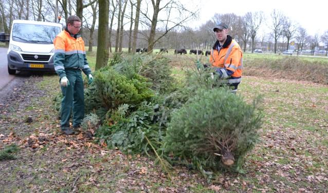 In 2018 werden er al veel kerstbomen ingezameld.