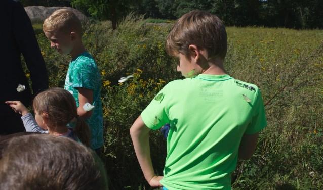 Ook vlinders kom je tegen in de omgeving van de Volksabdij.