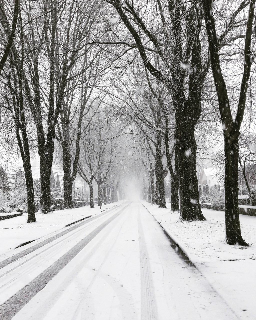 De fietsstraat op de Hescheweg. (Foto: Lonneke van Ooijen)