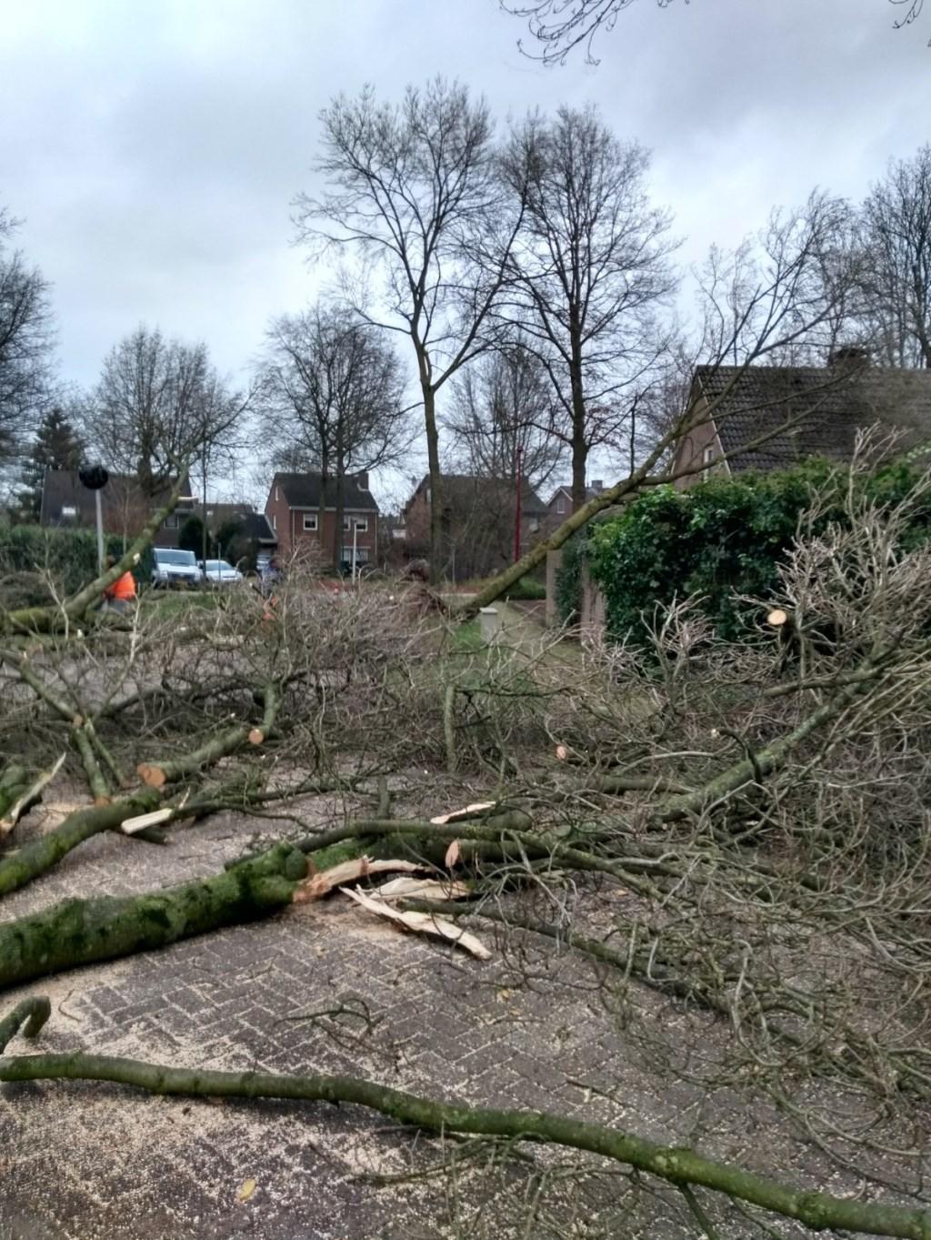 Vier bomen omgevallen in Kasteleinstraat te Oss. (Foto: Tinie Pijnappels)