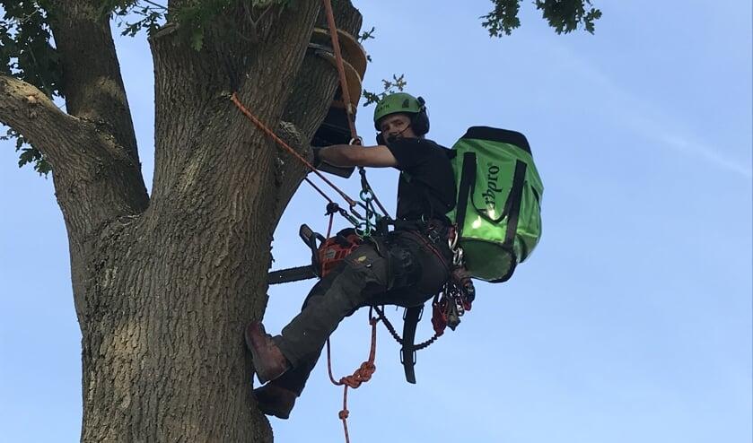Snoeien, rooien, versnipperen, stormschade en bomen planten. Zowel particulieren als bedrijven kunnen bij Boomverzorging Arie Arts aankloppen voor deze diensten en bijbehorend advies.