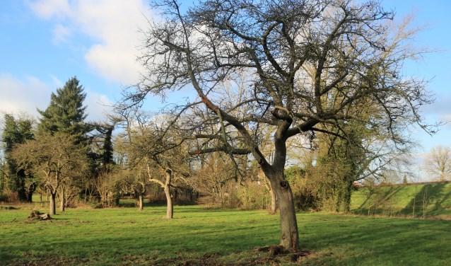 De historische boomgaarden in Grave.