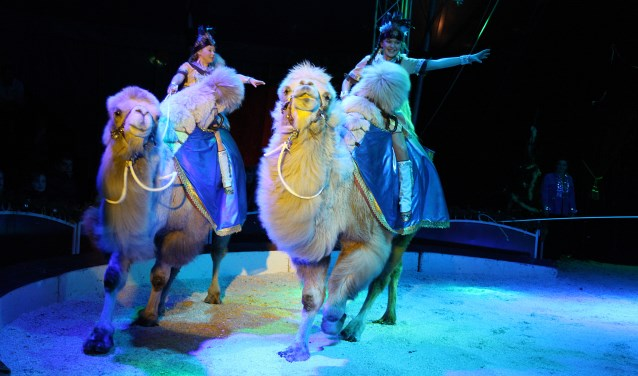 De voorstelling duurt ruim twee uur, waarin alle facetten van het klassieke circus aan bod komen.