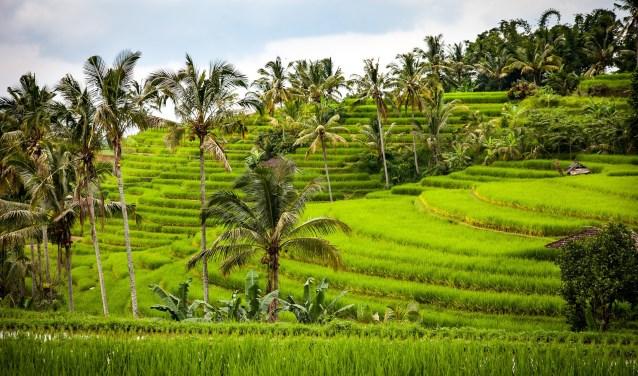 De komende Reizen Proeven gaat over Indonesië.