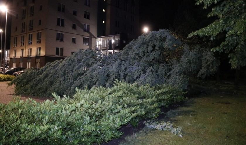 Op de parkeerplaats bij het Ketelhuis in Gennep viel een boom.