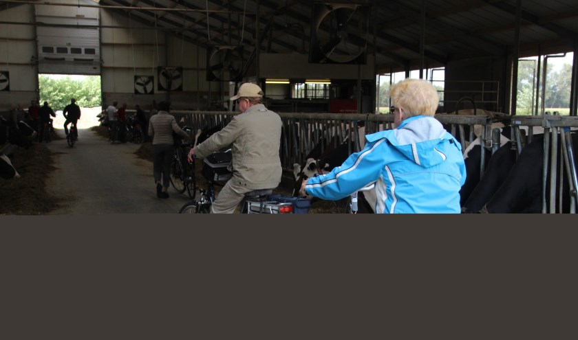 Deelnemers fietsen dwars door een stal.