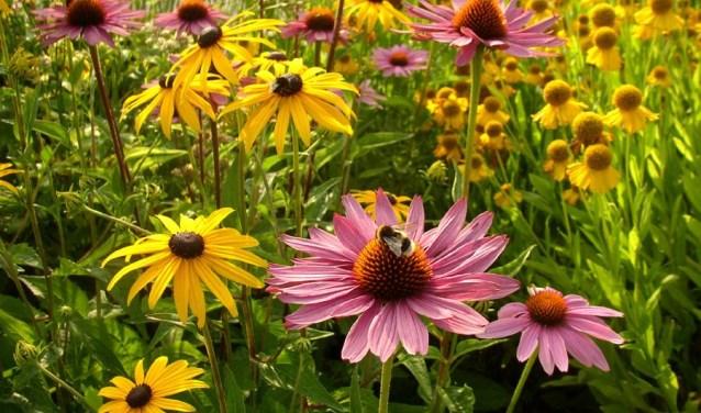 Biodiversiteit goed voor bijen en vlinders
