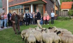 Tijdens de tweede IJsselsteinse Dag van de Duurzaamheid kwamenook de schapen langs  achter de bibliotheek. Foto: Lysete Verwegen