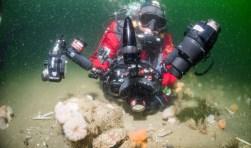 Udo van Dongen tijdens een van zijn duiken in de Noordzee. Onder water is de zee onvoorspelbaar en herbergt een schat aan natuur. Foto: Cor Kuyvenhoven