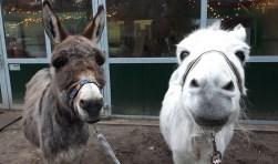 Jesse en Jaap. Een gezond 2017 toegewenst door de ezels en hun personeel!