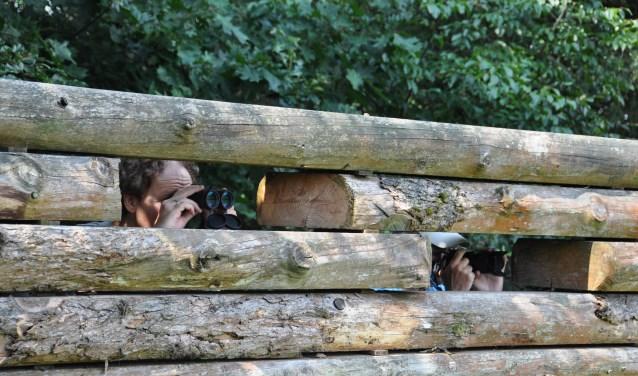Een wildobservatieplaats. Staatsbosbeheer wil aan de Alverschotenseweg bij Hoog Buurlo een nieuwe wildobservatieplaats bouwen. Wild kijken is iets magisch en veel bezoekers komen ervoor naar de Veluwe.